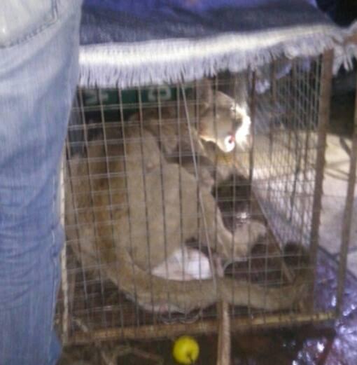 La situación del puma en Cerrito