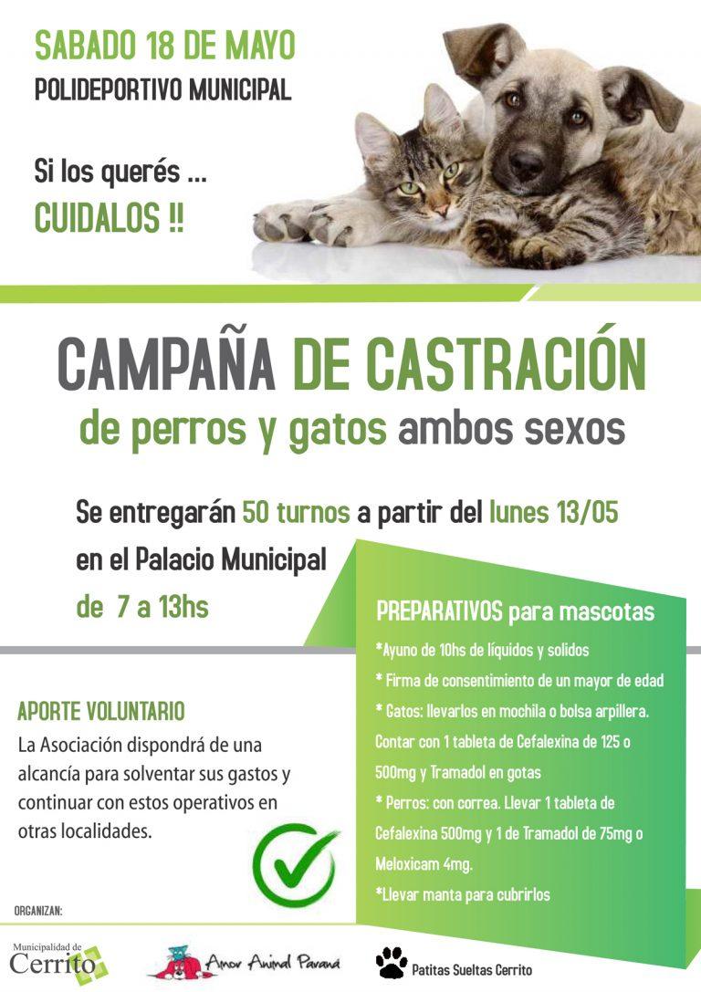 Campaña de castración de mascotas