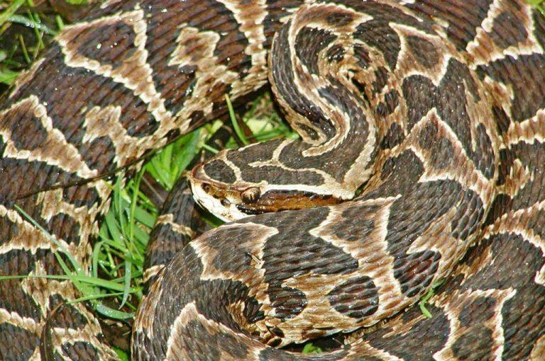 «La aparición de serpientes en el casco urbano tiene que ver con los incendios»