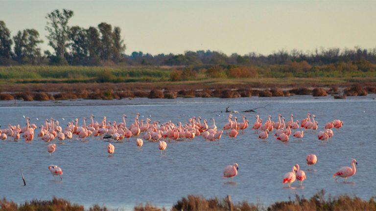 Argentina sumó la reserva natural más grande del país