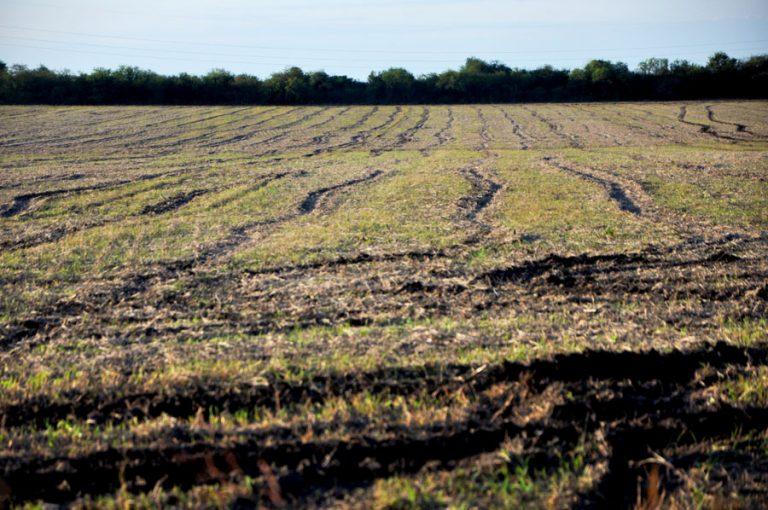 5 de diciembre – Día mundial del suelo