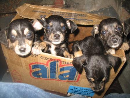 rejas-perros-4