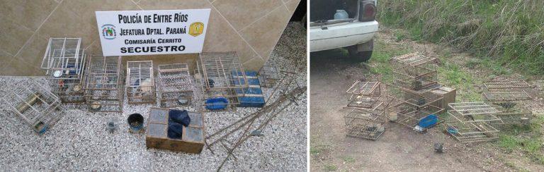 Secuestro de aves en Colonia Rivadavia
