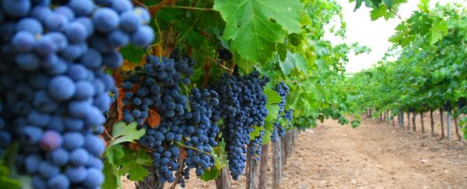 Destacan el resurgimiento de las viñas en Entre Ríos