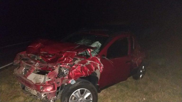 Accidente de tránsito con un búfalo